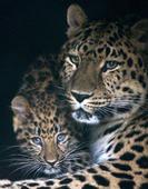 Тропа леопарда +  «Теплое море»