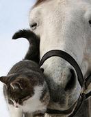 Прогулки на лошадях + горячий бассейн