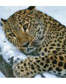 Тропа леопарда + Теплое море
