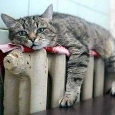 Кто виноват и что делать? — жители Владивостока жалуются на отопление (ПАМЯТКА)